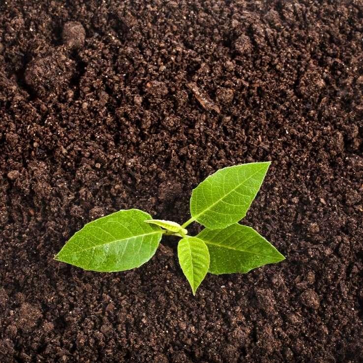 Грунт растительный с доставкой по Киеву и области | http://www.u-m-g.com.ua/